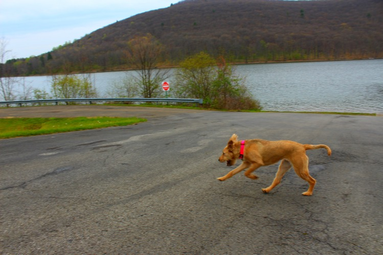 Allegheny Reservoir 1