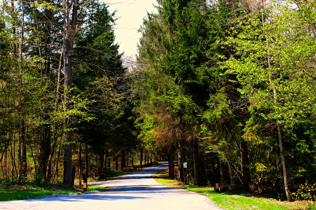 Bendigo State Park Entrance